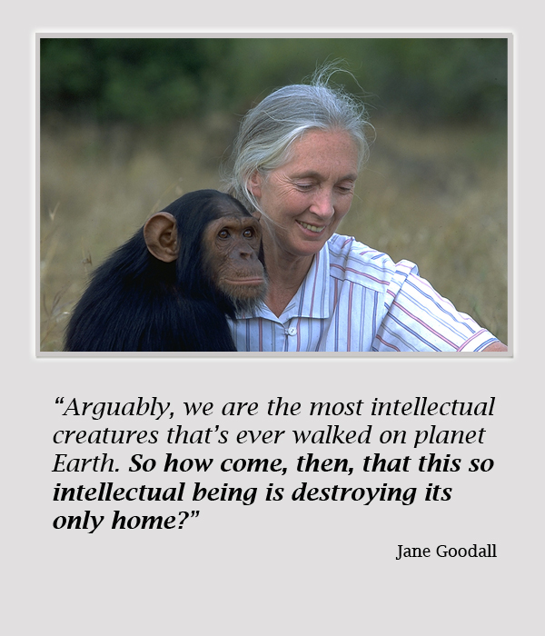 Jane Goodall Quotes: 2 New Films: Occupy Love And Surviving Progress