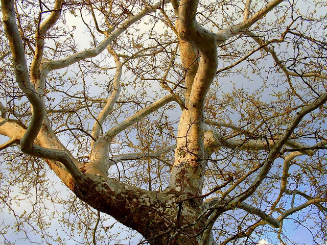 Like Branches In A Tree The New Education Of The 21st